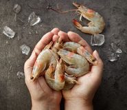 Fresh raw prawns Royalty Free Stock Photo