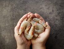 Fresh raw prawns in human hands. On dark gray background Royalty Free Stock Image