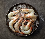 Fresh raw prawns and ice Royalty Free Stock Photo