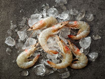 Fresh raw prawns and ice Stock Photography