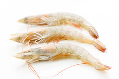 Fresh raw prawns isolated on white. Background Royalty Free Stock Photos