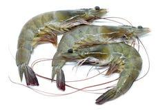 Fresh raw prawns. Isolated on white background Stock Image