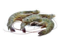 Fresh raw prawns. Isolated on white background Stock Photography