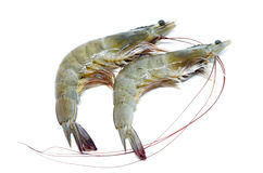 Fresh raw prawns. On white background Stock Photography