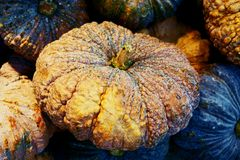Fresh raw pumpkin close up background royalty free stock photos