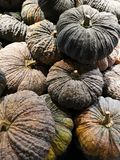 Pumpkins sold in the supermarkets. royalty free stock images