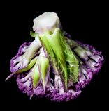 Fresh Purple Cauliflower. Fresh Raw Purple Cauliflower with Leafs Bottom Up isolated on Black background Royalty Free Stock Photo