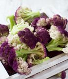 Fresh raw purple cauliflower. In a wooden box close up Royalty Free Stock Photography