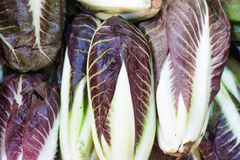 Fresh raw purple chicory italian radicchio. Close up in market Royalty Free Stock Images