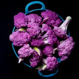 Fresh Purple Cauliflower. Fresh Raw Purple Sprouts of Cauliflower with Leafs in Blue Bowl isolated on Black background. Top View Stock Photography
