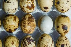 Fresh raw quail eggs brown and gray in plastic packaging,. Close-up Royalty Free Stock Photo