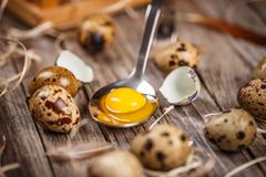Fresh quail egg. Fresh raw quail eggs in spoon on wooden background Royalty Free Stock Photo