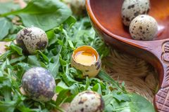 Fresh raw quail eggs in wooden spoon with arugula and spinach salad leaves stock photos