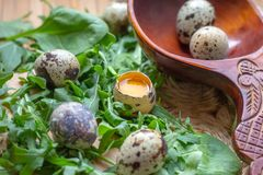 Fresh raw quail eggs in wooden spoon with arugula and spinach salad leaves on rustic straw and wooden vintage background. stock photo