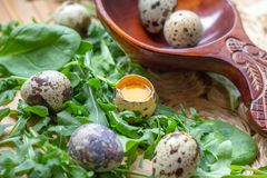 Fresh raw quail eggs in wooden spoon with arugula and spinach salad leaves stock image