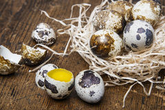 Fresh raw quail eggs Stock Image