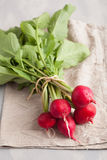 Fresh raw radish with leaves over gray background Stock Photography