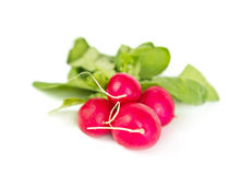 Fresh raw radish on white. Background Stock Images