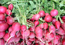 Fresh raw radishes market display Stock Images