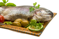 Fresh raw rainbow trout. Isolated in white background Royalty Free Stock Photo