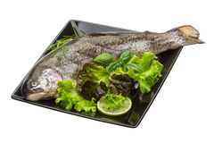 Fresh raw rainbow trout Royalty Free Stock Images