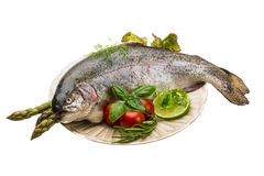 Fresh raw rainbow trout. Isolated in white background Stock Photos