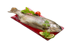 Fresh raw rainbow trout. Isolated on white background Royalty Free Stock Images