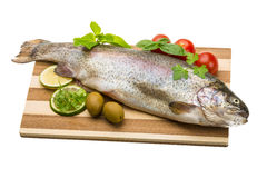 Fresh raw rainbow trout. Isolated on white background Royalty Free Stock Photo