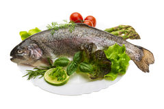 Fresh raw rainbow trout. Isolated in white background Royalty Free Stock Photography