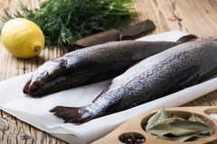 Fresh raw rainbow trout on parchment. On wooden rustic table, selective focus Stock Images