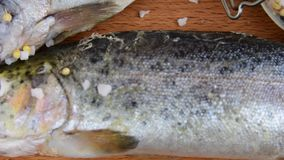 Fresh raw rainbow trouts with spices on wooden board. Healthy food and dieting concept. Close-up.  stock footage