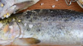 Fresh raw rainbow trouts with spices on wooden board. Healthy food and dieting concept. Close-up.  stock video