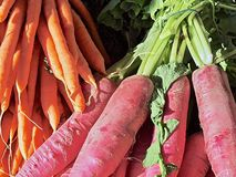Fresh raw red beet outside royalty free stock images