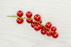 Fresh raw red currant berry on grey wood. One whole red currant berry string flatlay isolated on grey wood royalty free stock photos