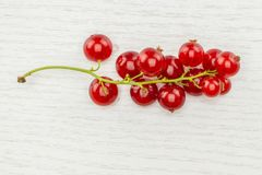 Fresh raw red currant berry on grey wood. One whole red currant berry string flatlay isolated on grey wood stock photography