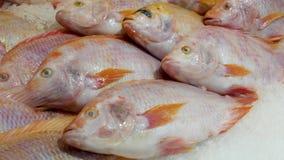 Fresh fish in ice in market