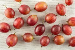 Fresh raw red gooseberry on grey wood. Lot of whole fresh red gooseberry hinnomaki variety flatlay on grey wood Stock Photography