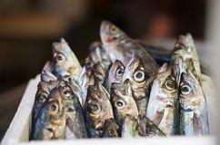 Fresh raw red snapper and mackerel fish in market. Sicilian street market. Maltese market. Fresh fish closeup. With blurry background Royalty Free Stock Photo