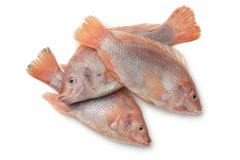 Fresh raw red tilapia fishes. Isolated on white background Stock Photos