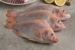 Fresh raw red tilapia fishes. In the kitchen Stock Images