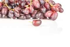 Fresh raw red wine grapes isolated on white. Red globe grape cluster and one fresh shiny dark pink berry isolated on white background Royalty Free Stock Photo