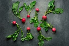 Fresh Raw Ripe Red Radishes with Green Leaves Scattered on Dark Concrete Stone Background. Top View Flat Lay. Minimalist Style. Creative Image Template for Stock Image