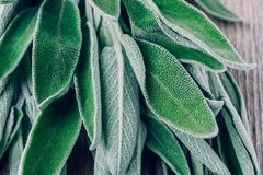 Fresh raw sage leaves on wooden table. Royalty Free Stock Images