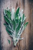 Fresh raw sage leaves on wooden table. Royalty Free Stock Photo