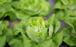 Fresh raw salad in Chiangmail Stock Images