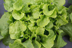 Fresh raw salad Royalty Free Stock Image