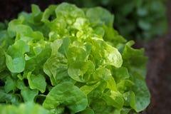 Fresh raw salad. In garden Royalty Free Stock Photo