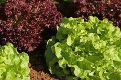 Fresh raw salad. In garden Stock Photos