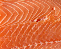 Fresh raw salmon. Closeup of fresh raw salmon filet Stock Photos