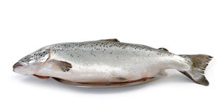 Fresh raw salmon Royalty Free Stock Photo